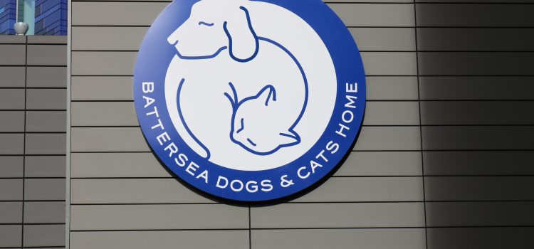 Foxtrail Visits Battersea